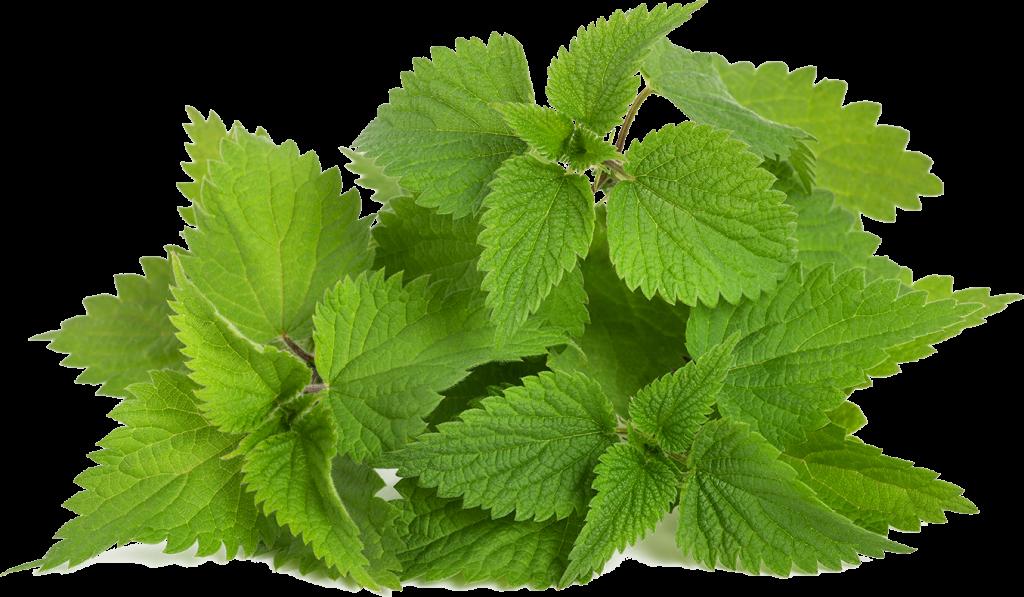 רפואה טבעית מעלי סרפד-המופיקס