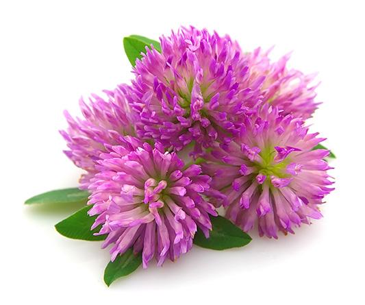פרח סגול -הנוסחה של המופיקס